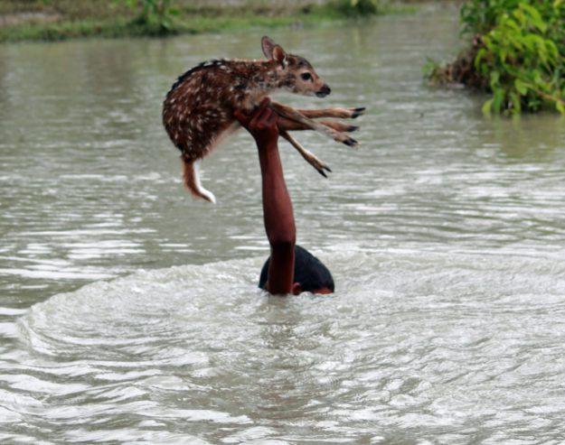 Мальчик спасает оленёнка