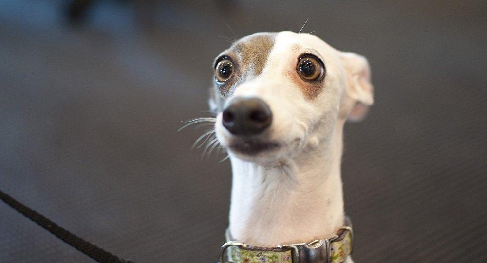 Собаку съел - значение и происхождение фразеологизма