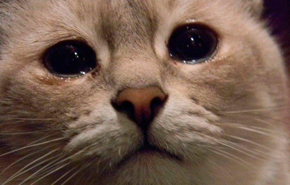 Кот наплакал - значение и происхождение фразеологизма