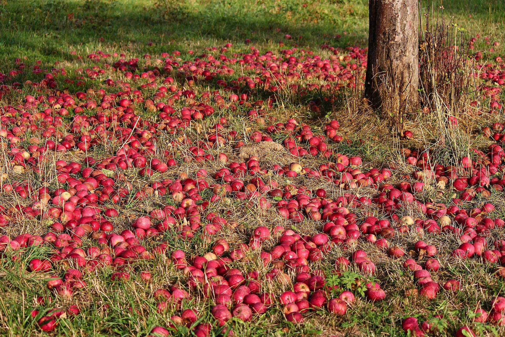 Яблоко от яблони не далеко падает