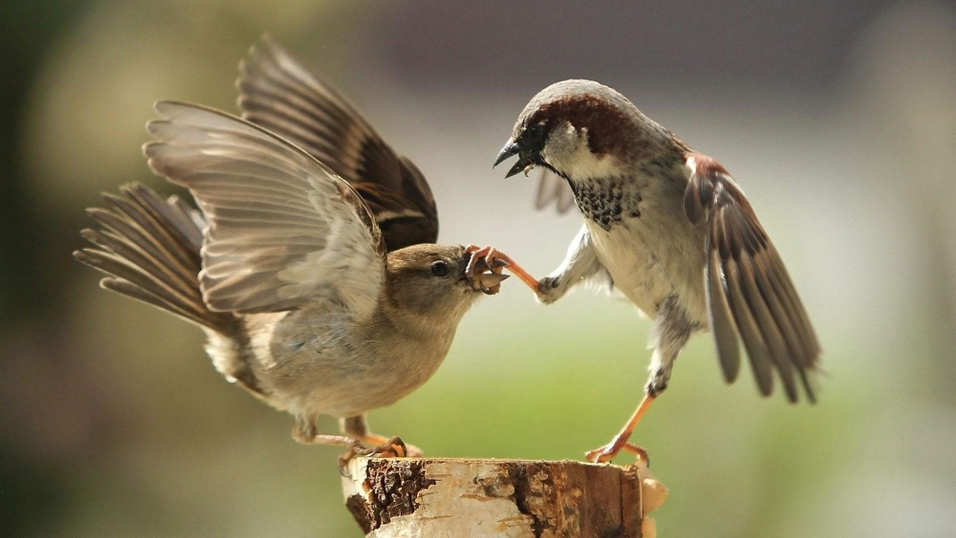 Слово - не воробей, вылетит - не поймаешь