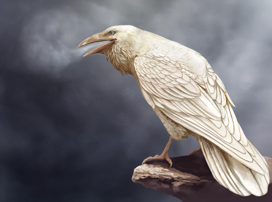 Белая ворона - значение и происхождение фразеологизма