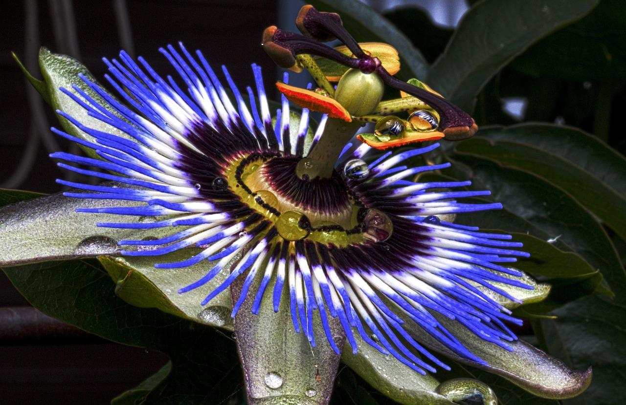 интересные факты о растениях