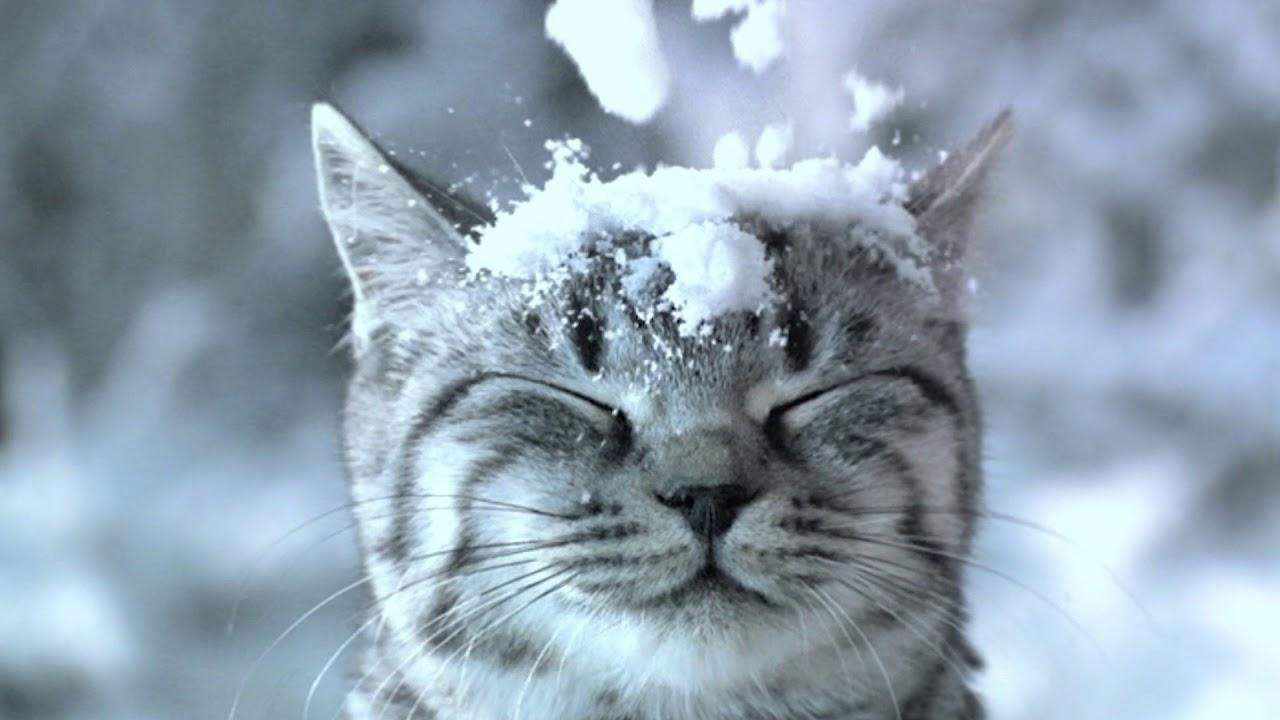 Как снег на голову