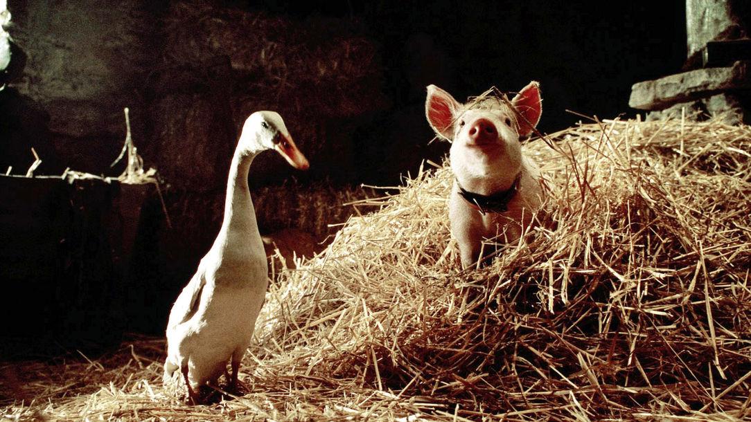 Гусь свинье не товарищ - значение пословицы