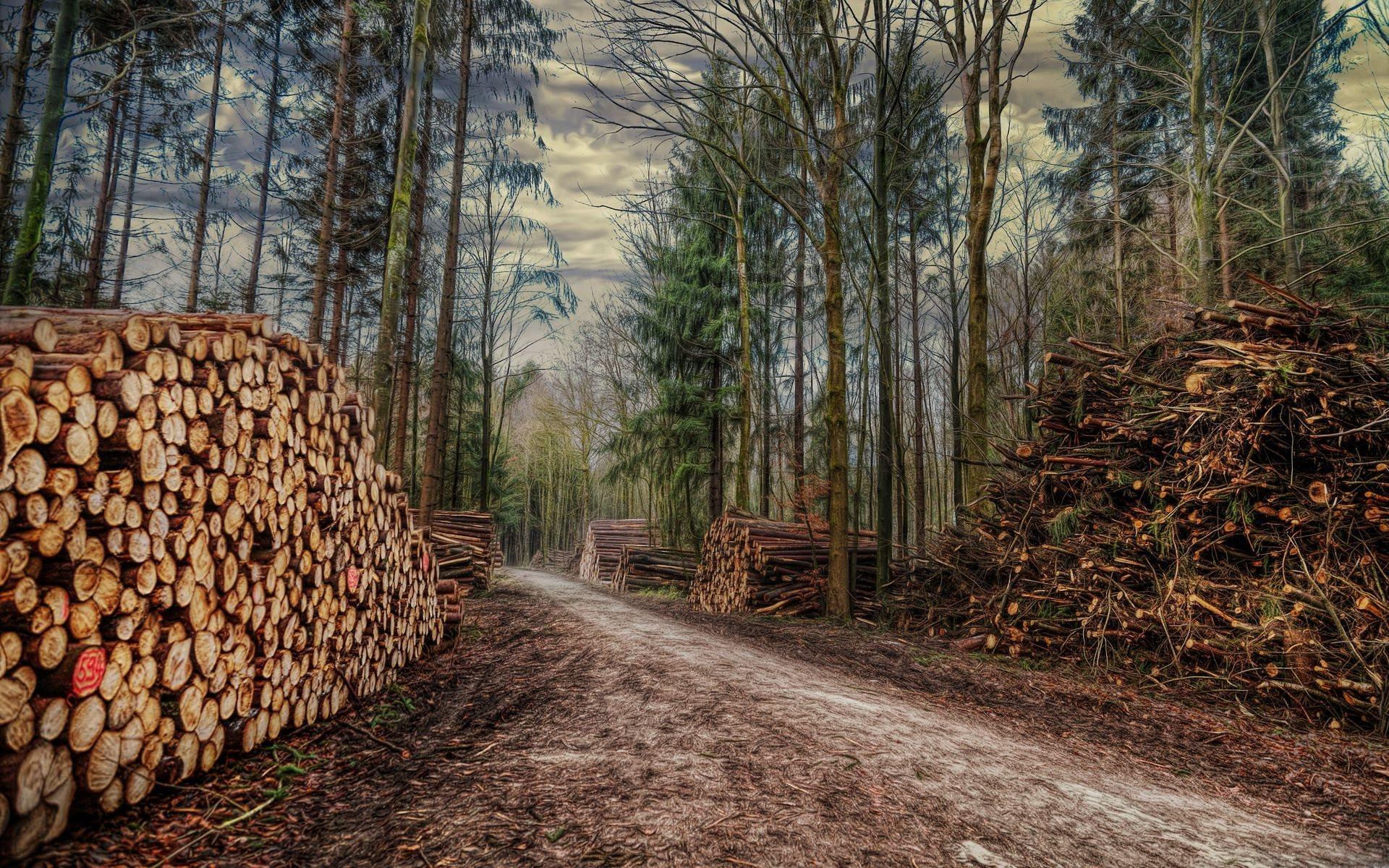 Значение пословицы «Чем больше в лес, тем больше дров»