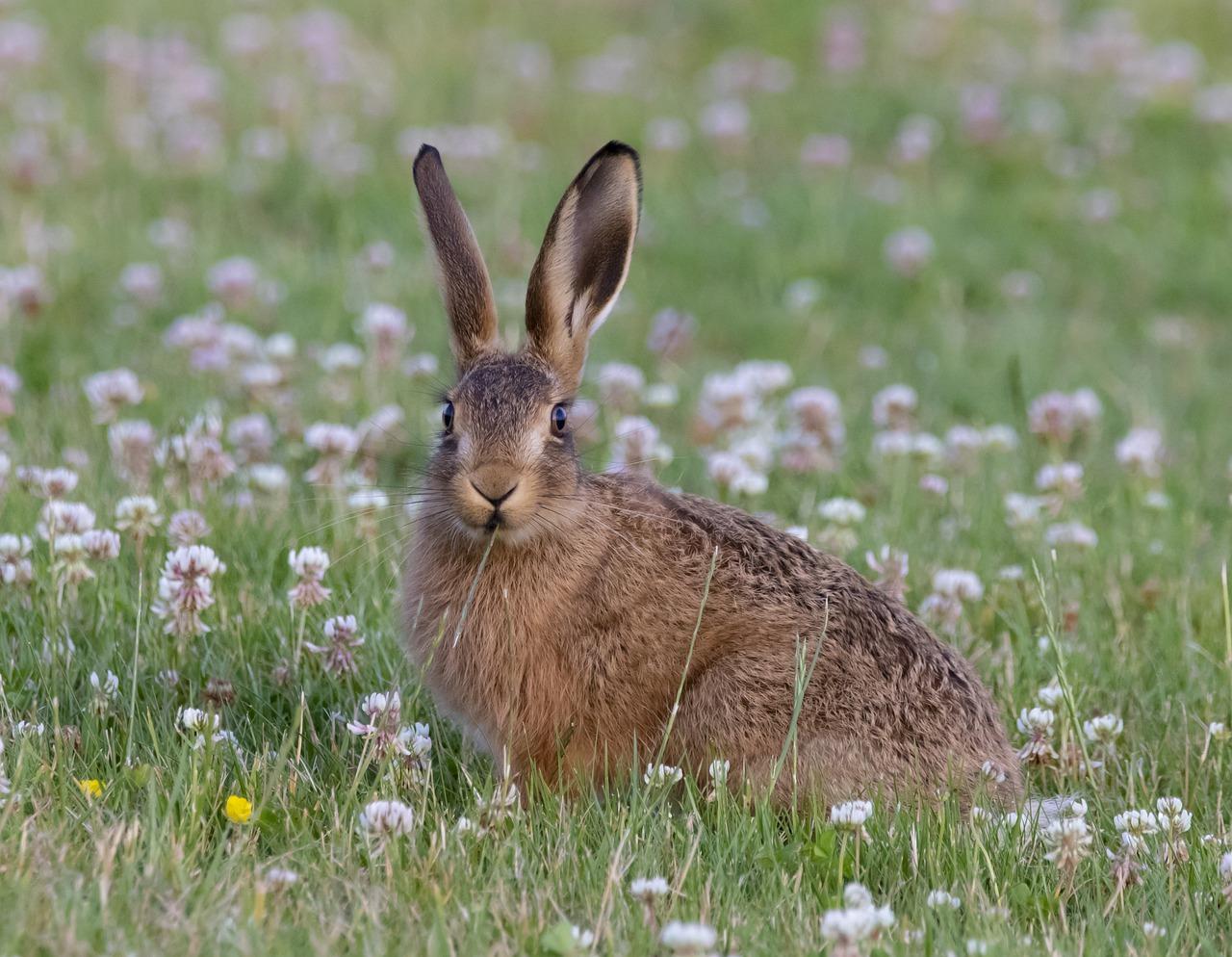 За двумя зайцами погонишься – ни одного не поймаешь - пословица