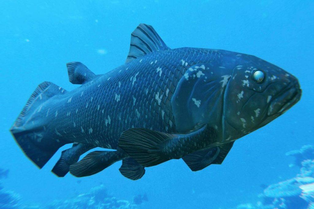 Самая древняя рыба на планете