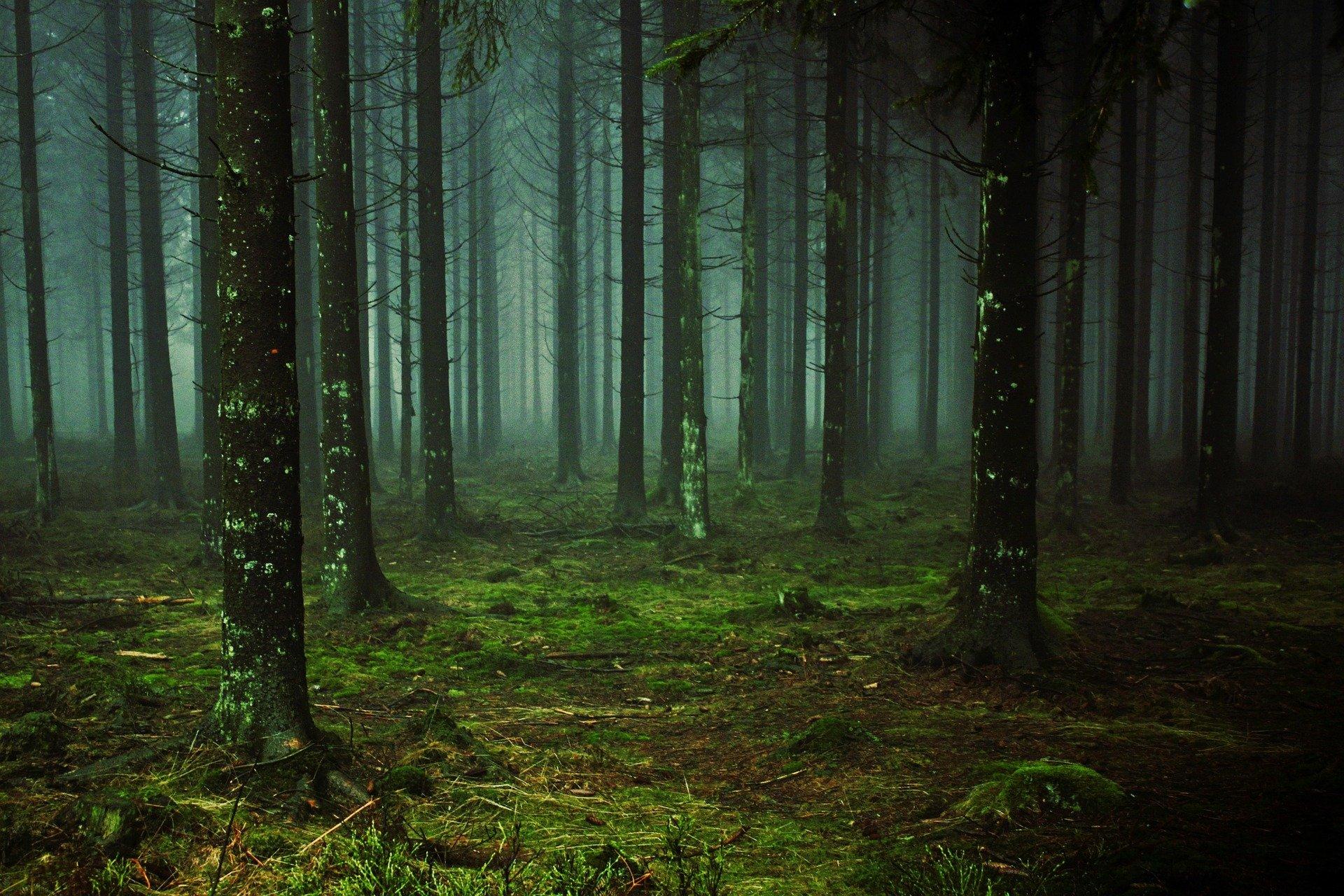 Лесные опасности