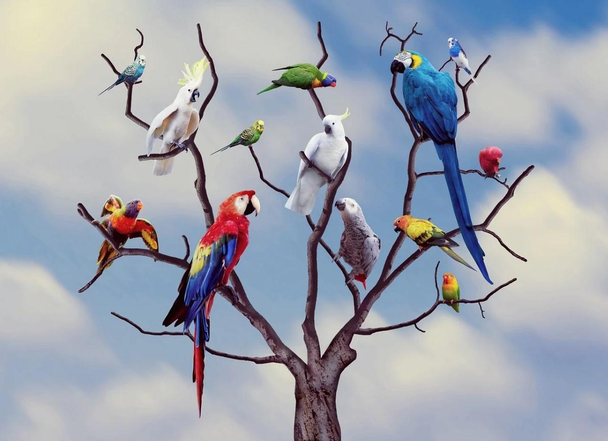 20 интересных фактов о птицах