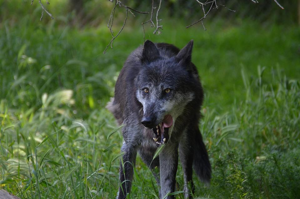 Смысл фразы «Тамбовский волк тебе товарищ!»