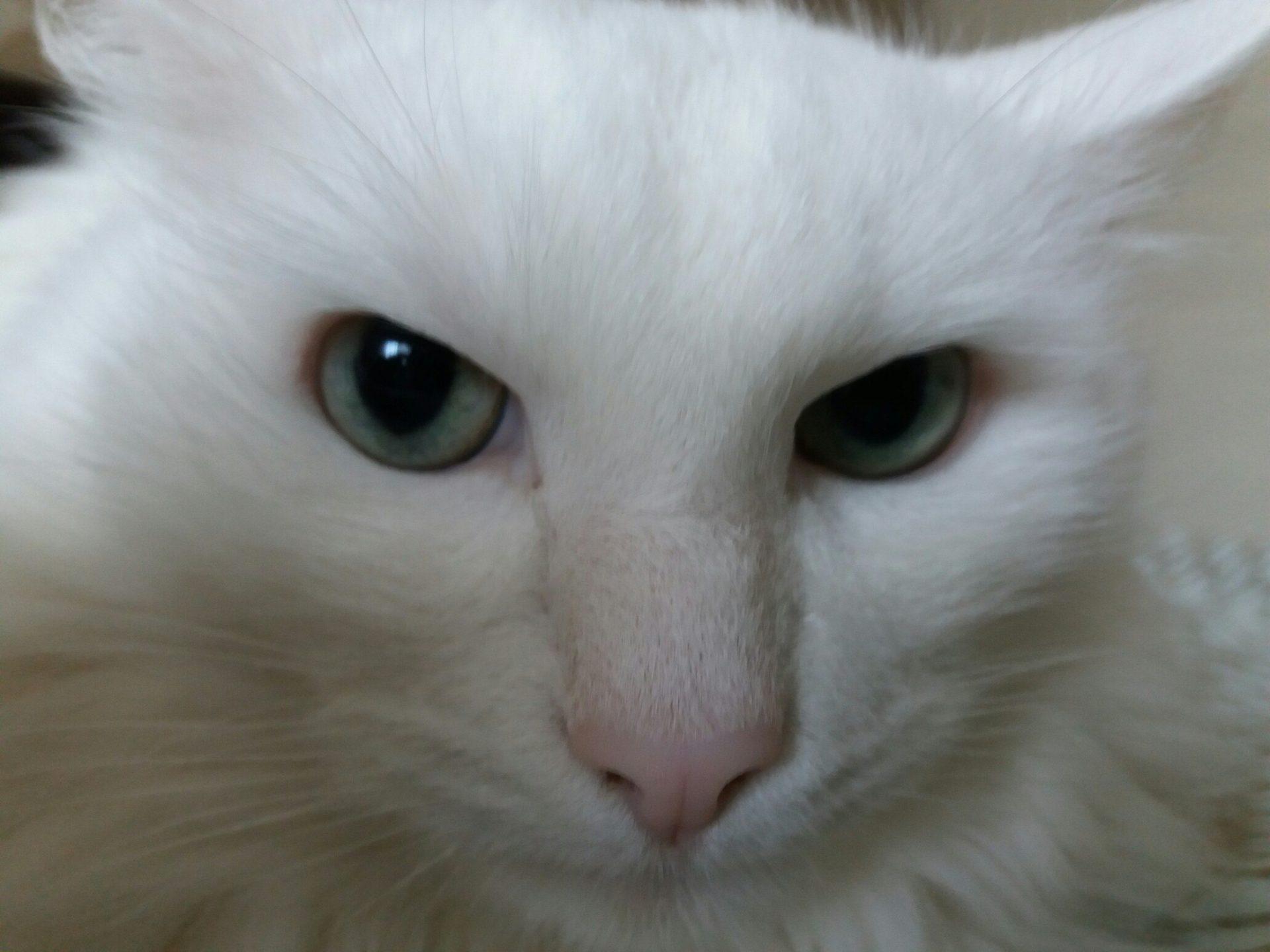 Значение и происхождение фразеологизма «Ёшкин кот»