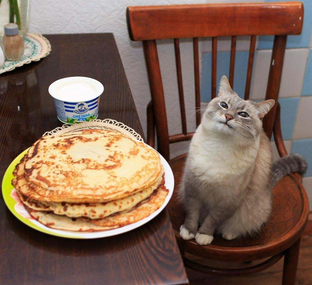 Смысл фразеологизма «не всё коту Масленица»