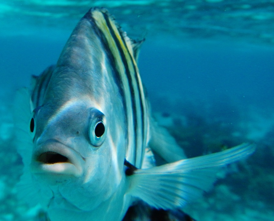 Смысл фразеологизма «Как рыба в воде»